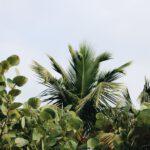 Een mandarijnboompje binnenshuis